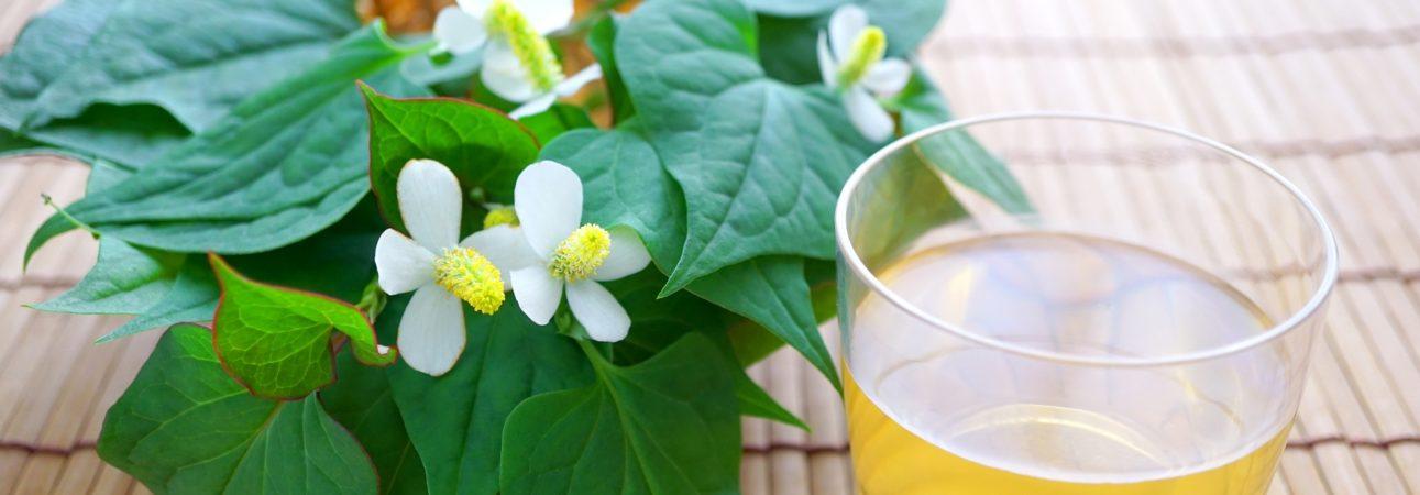 どくだみ茶の美味しい飲み方をご紹介します!