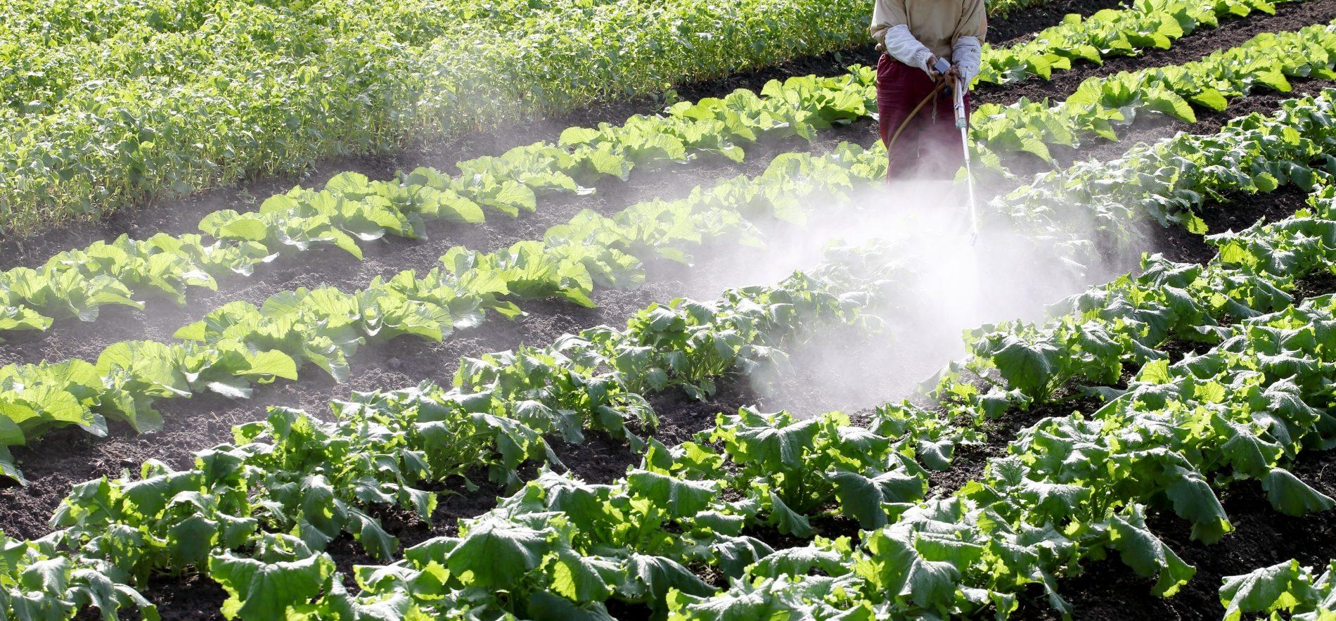 今回は、多くの方が気になる農薬について考えてみます。