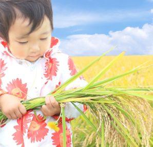 どうして肥料が必要なのか?慣行栽培と自然栽培についてご紹介します。