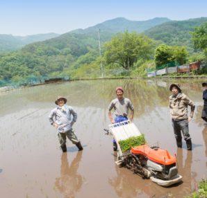 無農薬無肥料の自然栽培野菜と、有機JASマークについてのご紹介