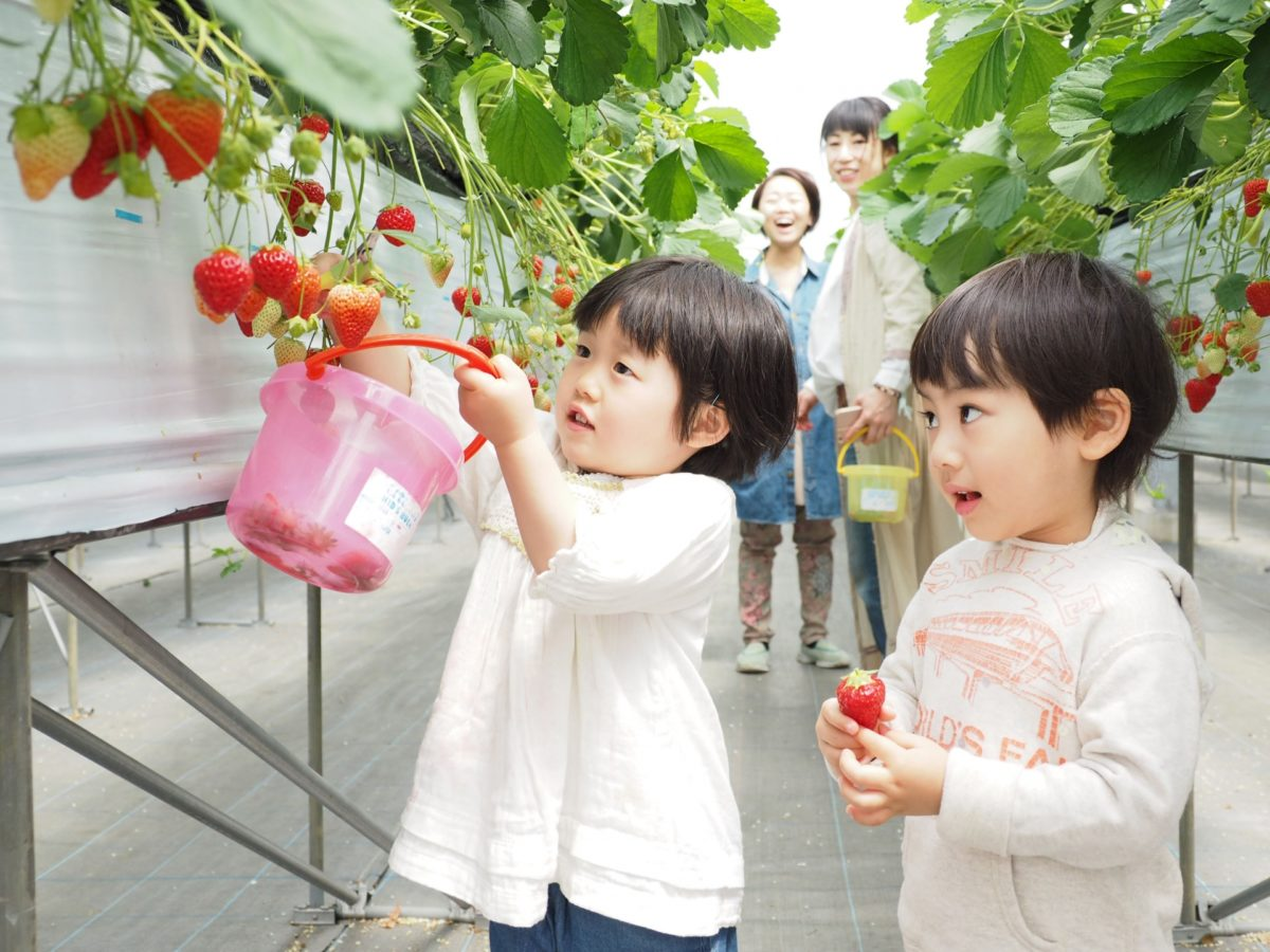 今が旬!免疫力アップのために、オーガニック農園でのイチゴ狩りをおすすめする理由をご紹介します。