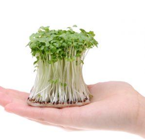 スプラウトとは「芽吹き野菜」の事です。春の時期にスプラウトを始めるのはいかがでしょうか。