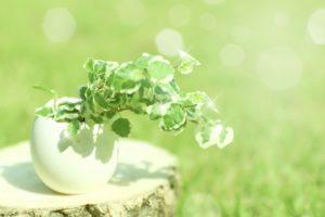 植物成分で、オーガニックスキンケアする美容方法、アンチエイジングについてご紹介します。