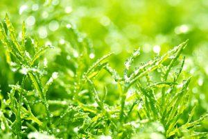 オーガニックスキンケアで、乾燥肌、美白、ニキビケア、たるみ、などの対策に植物の成分を有効活用できます。