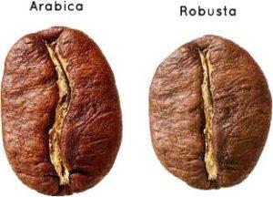 CAFEKO(カフェコ)はロブスタ種という種類で、一般的なアラビアンカ種より風味、コクの強めなベトナムならではの品種のコーヒー豆を使用しています。