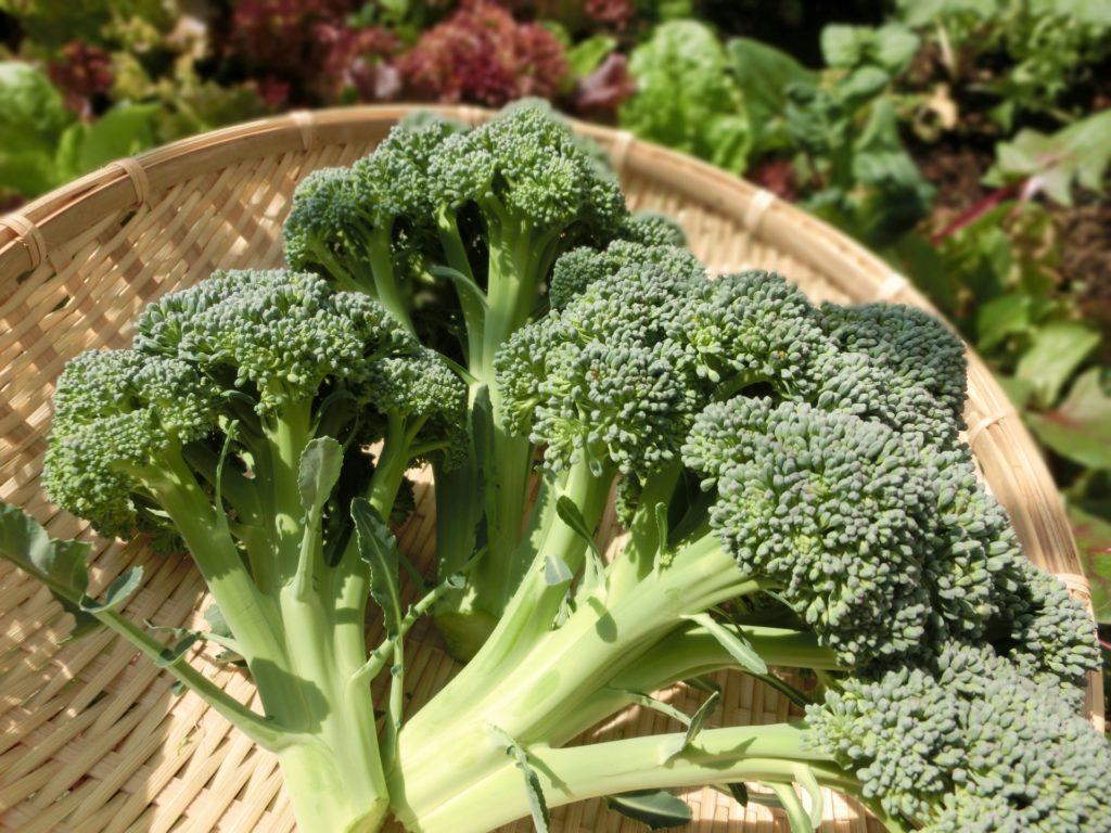 夏でもすっぴんを育てたい! 知ってよかった!一生ものの日焼け対策と予防ケアの食材「ブロッコリー」