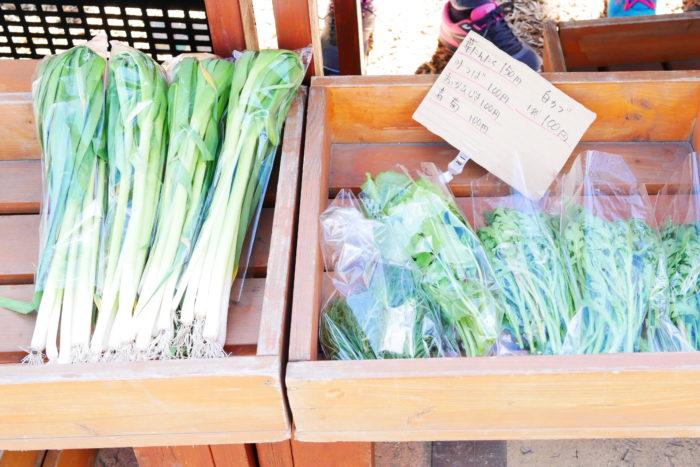 ここにある野菜はすべて十勝産で、農薬・化学肥料不使用なんです。この日店頭に並んでいたのは、青々と立派に成長した葉物野菜や丸々と大きく育ったラディッシュ、朝採りのうどなどです。