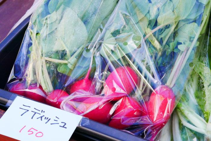 十勝産の農薬・化学肥料不使用の野菜。青々と立派に成長した葉物野菜や大きく育ったラディッシュがたくさん並んでいました。