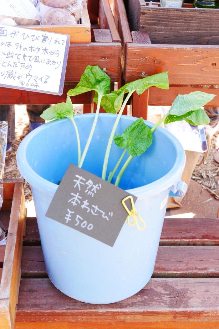 ビオまるしぇならでは!東京ではなかなか見ない珍しいお野菜もありました。