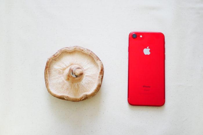 私のiPhoneほどもある大きな原木しいたけです!