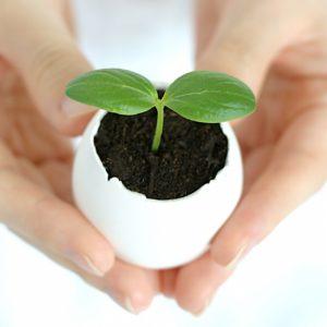 食の安全と健康を守るために、自分や家族を取り巻く環境について考えよう!種子法について・その①