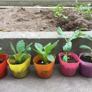 初心者がプランターで簡単家庭菜園に挑戦!食べるまでの成長記録レポート!~その1~